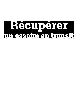 TRAVAIL AU RUCHER 2