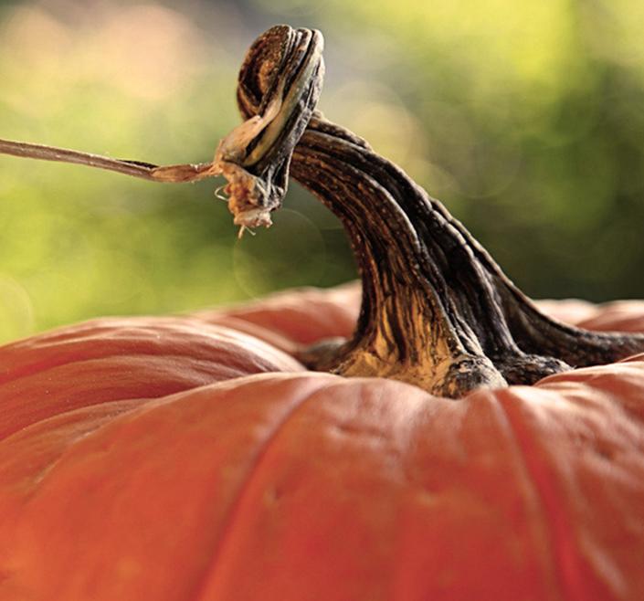 visite d'automne