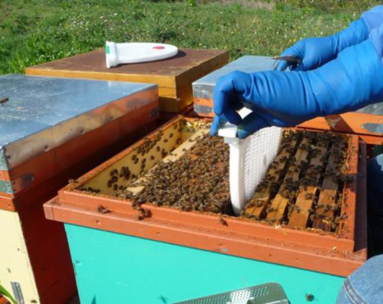Positionnement de la cage dans la ruche